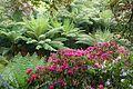 Trebah Garden - Cornwall, England - DSC01714.jpg