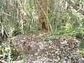 Tree RootsShell Midden.jpg