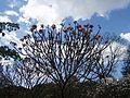Tree and nature.jpg