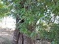 Tree hollow (4).JPG