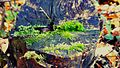 Tree trunk moss 01.jpg