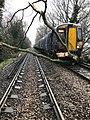 Trees block a railway line.jpg