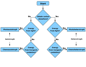 Phototroph - Flowchart to determine if a species is autotroph, heterotroph, or a subtype