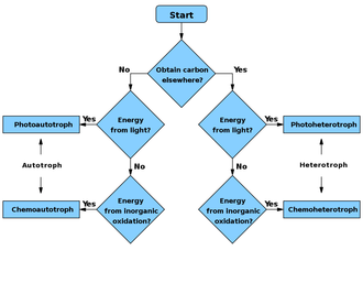 Primary nutritional groups - Simplified flowchart for determining if an organism is an autotroph, heterotroph or a subtype.