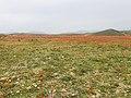 Tulip Fields in Armenia E6183.jpg