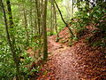 Twin-falls-trail - West Virginia - ForestWander.jpg