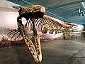 Tylosaurus pembinensis.jpg