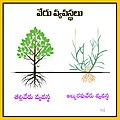 Types of Plant roots.jpg