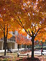 UMBC in autumn.jpg