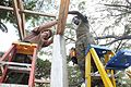 US Navy 111212-A-IP644-113 Builder 2nd Class Phillip Grindstaff and LCpl. Ronald Russell use a nail gun to steady rafters on an outdoor classroom b.jpg
