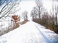 Uetersen Waldweg Langes Tannen 02.jpg