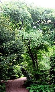 <i>Ulmus lamellosa</i> species of plant