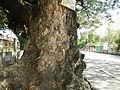 Umingan,Pangasinanjf4885 12.JPG