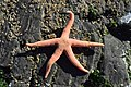 Una Estrella En Una Roca (130405983).jpeg