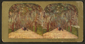 Under the live oaks of a Florida Highway, from Robert N. Dennis collection of stereoscopic views 4.png