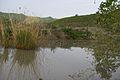 Uno stagno e i suoi inquilini - panoramio.jpg