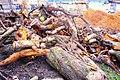 Urban logging (2220752650).jpg
