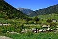 Vall de Sorteny (Ordino) - 49.jpg
