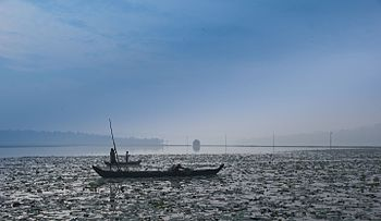 Vellayani Lake, Trivandrum, Kerala.jpg