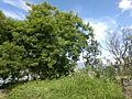Verano en Yaracuy.jpg