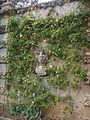 Villa la pietra, pomario, muro di cinta, busto.JPG