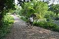 Village Road - Mellock - Howrah 2014-10-19 9976.JPG