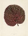Vintage illustrations by Benjamin Fawcett for Shirley Hibberd digitally enhanced by rawpixel 5.jpg