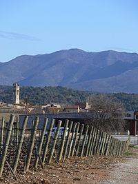 Vinyes a Mollet de Perelada (Alt Empordà, Catalunya).jpg
