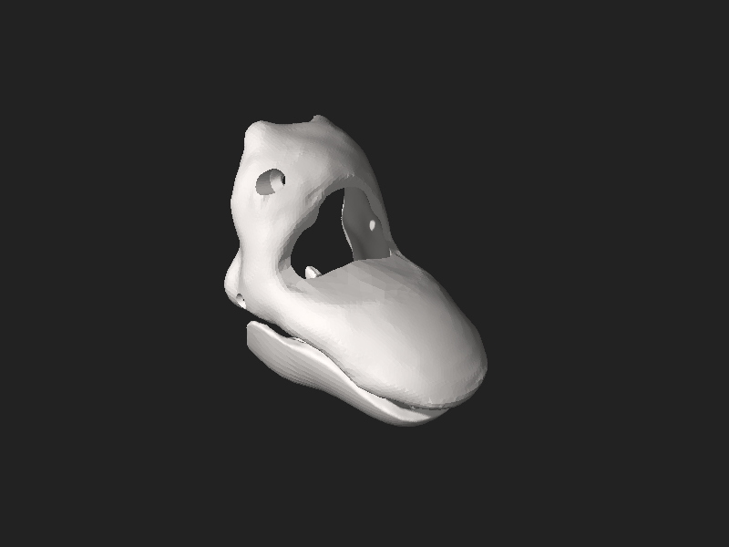 File:Vitoria beak 3D.stl