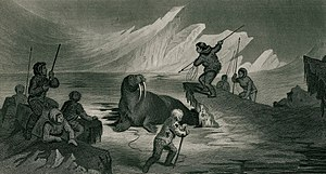 Culture of Greenland - A Walrus hunt in 1855.