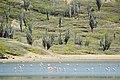 Washington-Slagbaai National Park (2447781210).jpg