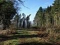 Webberton Wood - geograph.org.uk - 689404.jpg