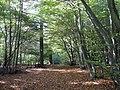 West Wood - geograph.org.uk - 1529868.jpg