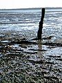 What remains of a wooden jetty - geograph.org.uk - 661773.jpg