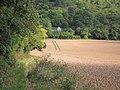 Wheat field - geograph.org.uk - 2521449.jpg