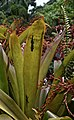 Wildlife reptile silouettes on the plants, Hawaii (32860184873).jpg