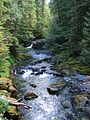 Willamette national forest creek.jpg