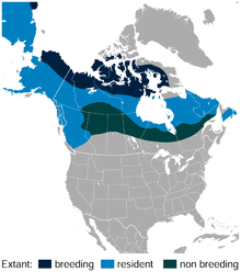 Willow Ptarmigan Lagopus lagopus distribution in North America map.png