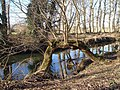 Willow bough, Mill Race, Millbrook - geograph.org.uk - 1412063.jpg