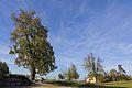 Winter- und Sommerlinde im Südosten von Kollmitzdörfl 2015-10 NDM WT-061.jpg