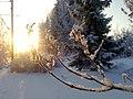 Winter - panoramio (32).jpg