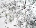 Winter in Elektrostal. 2020 year. img 035.jpg