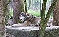 Wolf Tierpark Hellabrunn-1.jpg