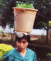 Woman bucket on head Indonesia.jpg