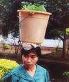 Woman bucket on head Indonesia.jpg