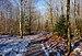 Woods trail in Chiny (DSCF7131).jpg