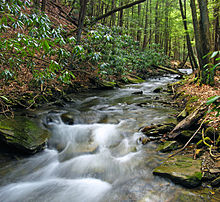 A stream flows over rocks and between evergreen trees