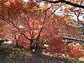 Yabakeimachi Oaza Oshima, Nakatsu, Oita Prefecture 871-0431, Japan - panoramio (17).jpg