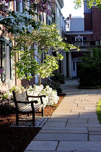 Pierson College - Pierson courtyard in spring