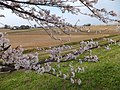 Yatsuomachi Nishijinzu, Toyama, Toyama Prefecture 939-2311, Japan - panoramio (20).jpg